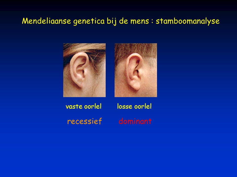 Mendeliaanse genetica bij de mens : stamboomanalyse