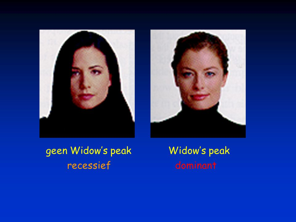 geen Widow's peak Widow's peak recessief dominant