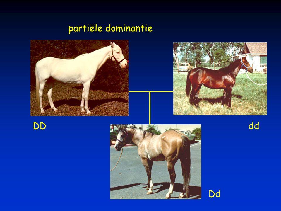 partiële dominantie DD dd Dd