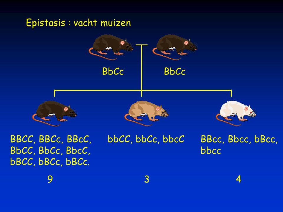 Epistasis : vacht muizen