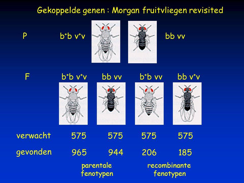 Gekoppelde genen : Morgan fruitvliegen revisited