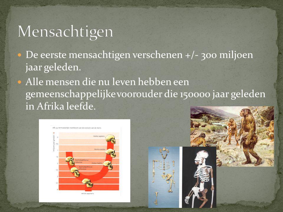 Mensachtigen De eerste mensachtigen verschenen +/- 300 miljoen jaar geleden.