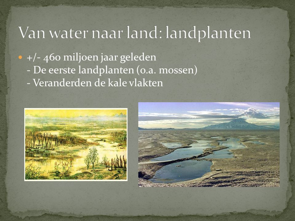 Van water naar land: landplanten