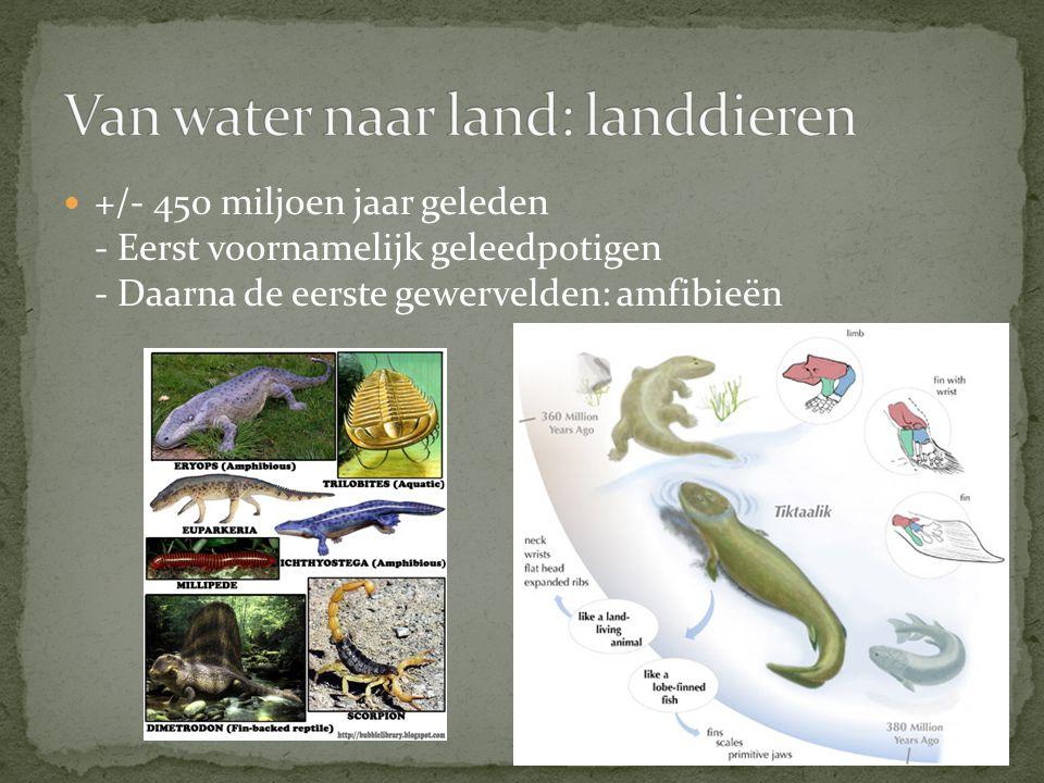 Van water naar land: landdieren