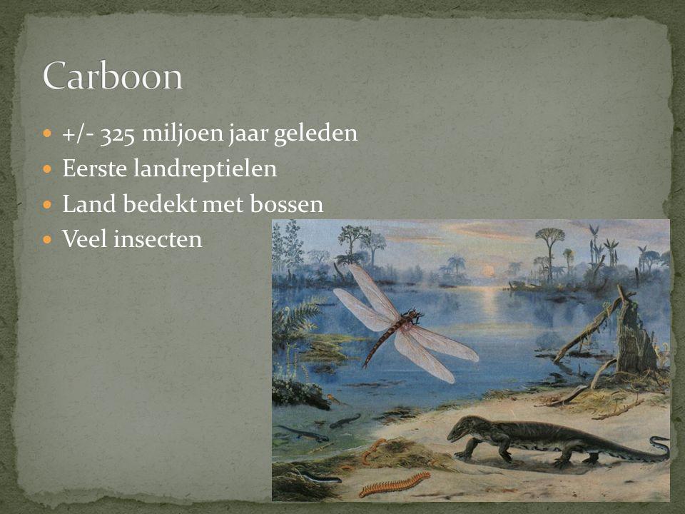 Carboon +/- 325 miljoen jaar geleden Eerste landreptielen