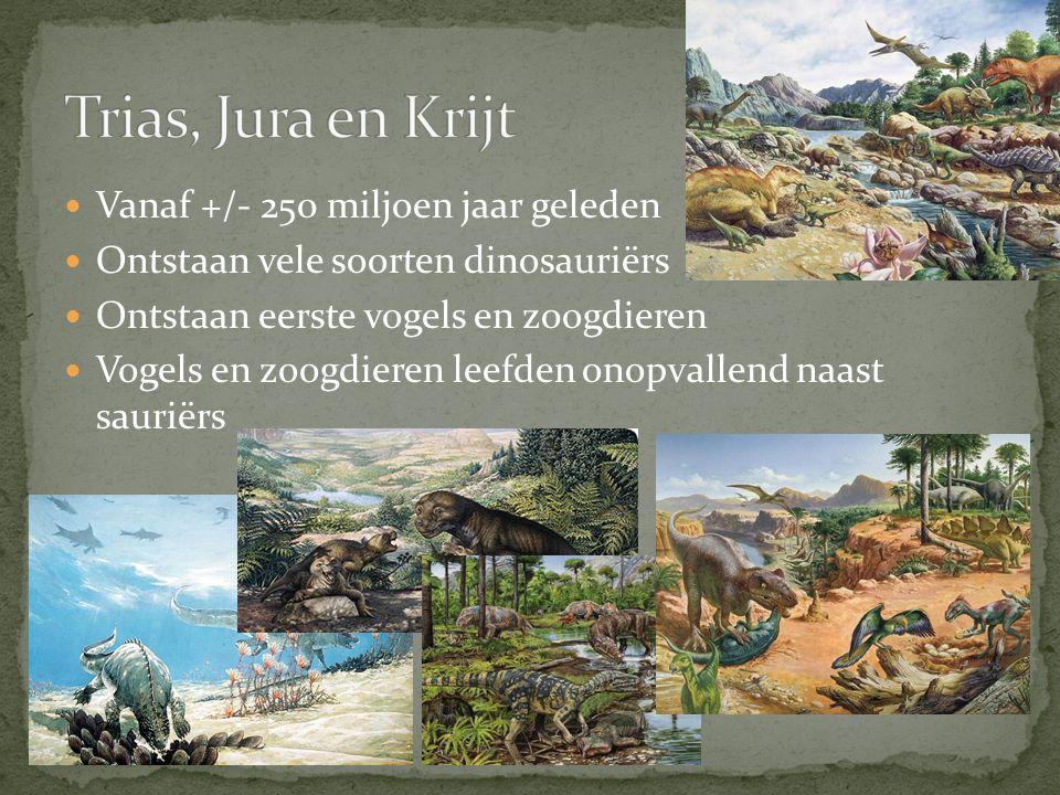 Trias, Jura en Krijt Vanaf +/- 250 miljoen jaar geleden