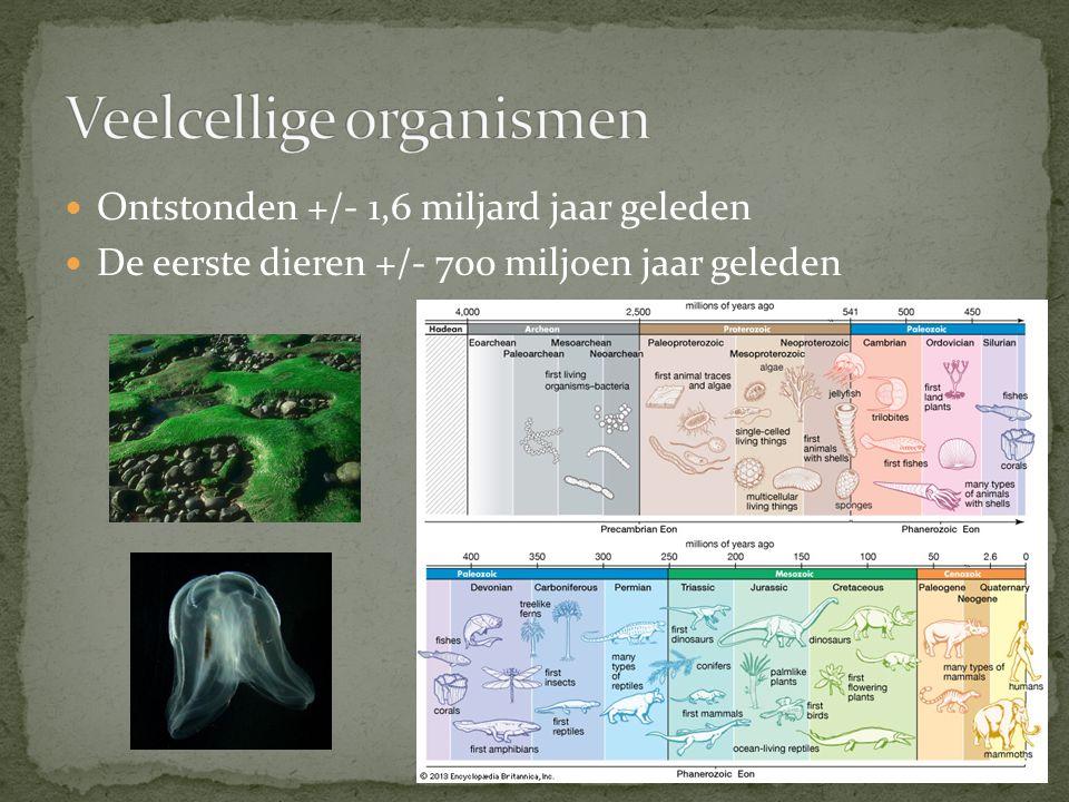 Veelcellige organismen