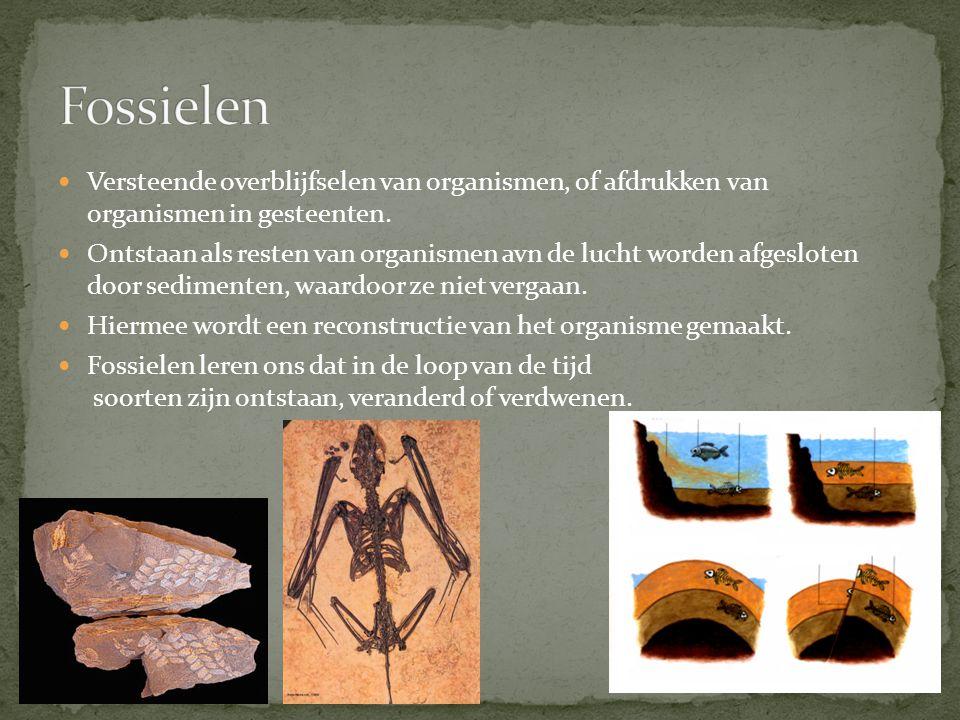 Fossielen Versteende overblijfselen van organismen, of afdrukken van organismen in gesteenten.