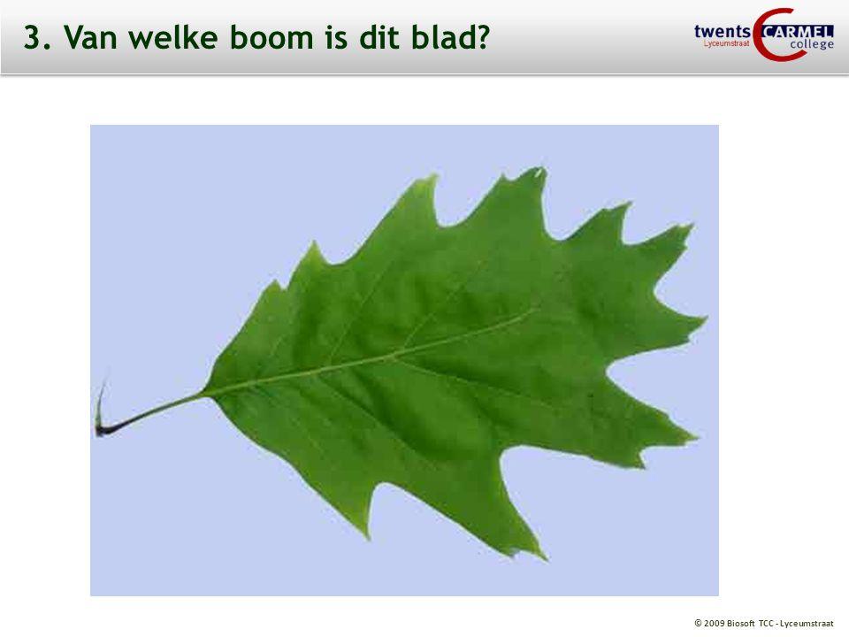 3. Van welke boom is dit blad