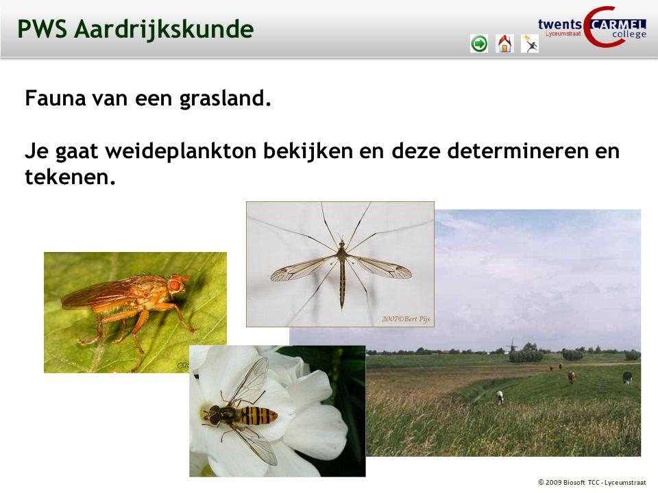 PWS Aardrijkskunde Fauna van een grasland.