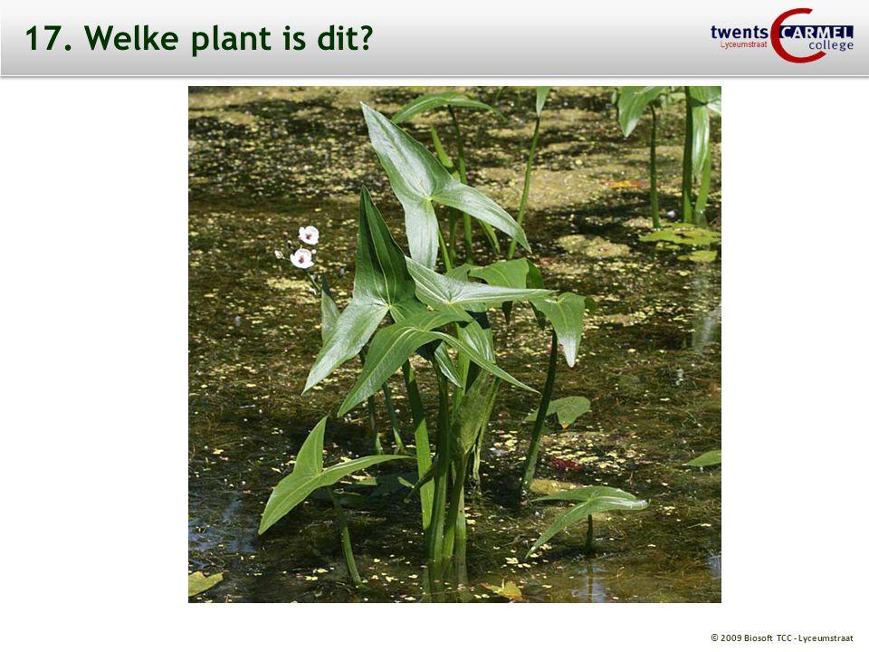 17. Welke plant is dit
