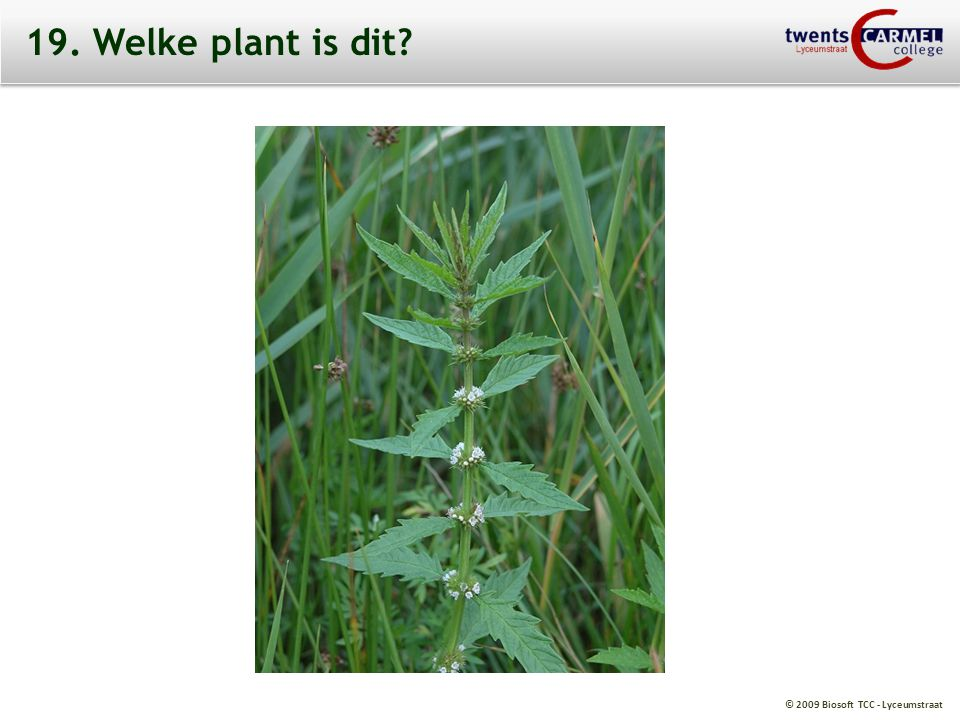 19. Welke plant is dit