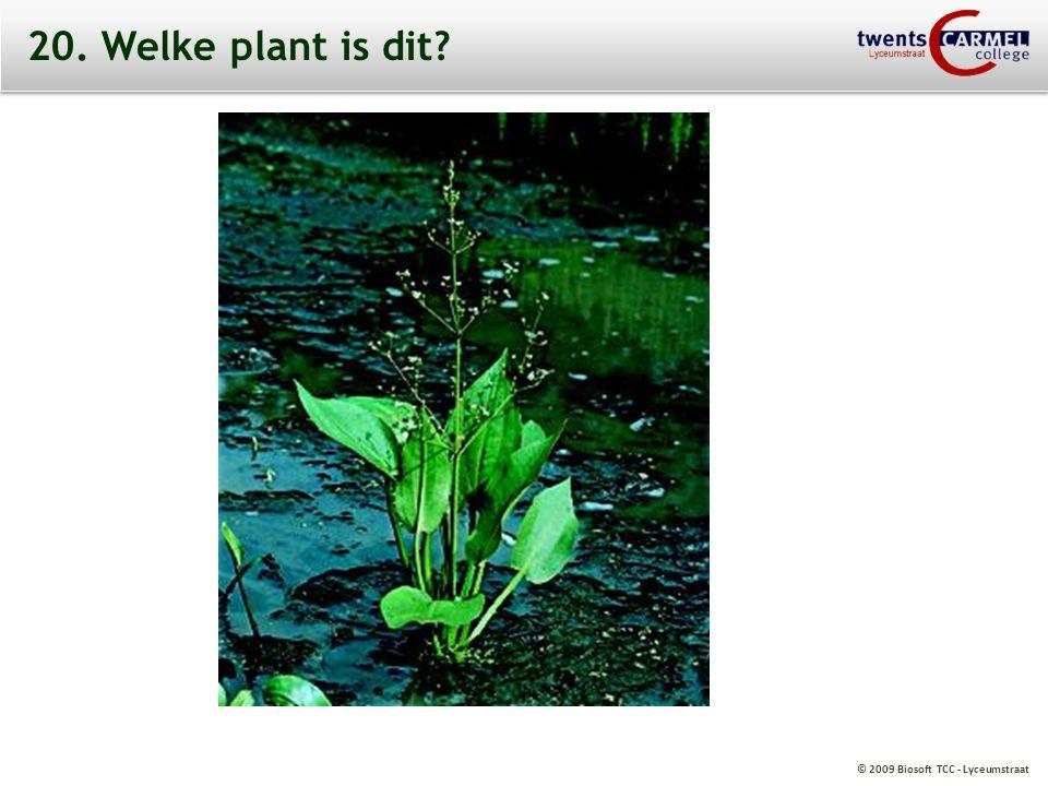 20. Welke plant is dit