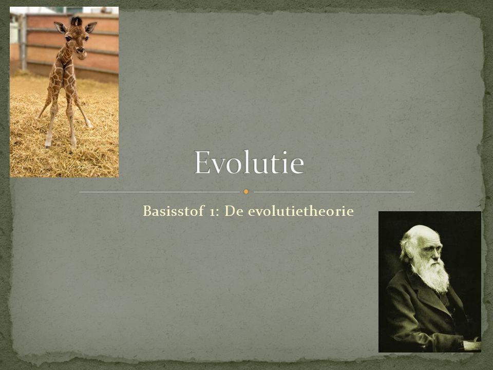 Basisstof 1: De evolutietheorie