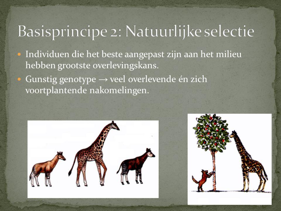 Basisprincipe 2: Natuurlijke selectie