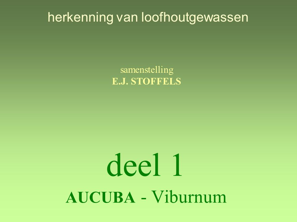 deel 1 AUCUBA - Viburnum herkenning van loofhoutgewassen samenstelling