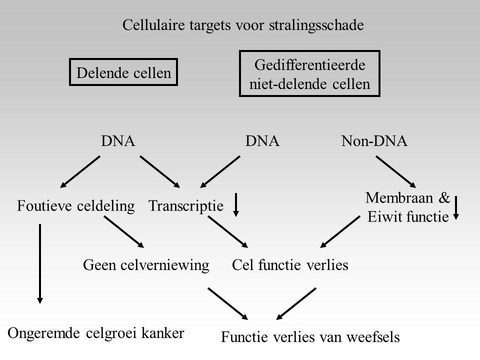 Cellulaire targets voor stralingsschade