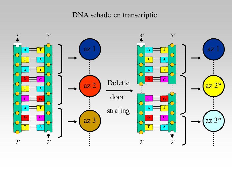 DNA schade en transcriptie