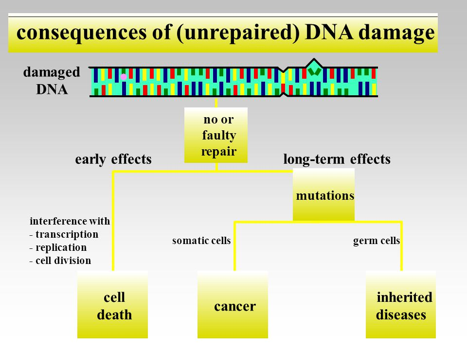 consequences of (unrepaired) DNA damage