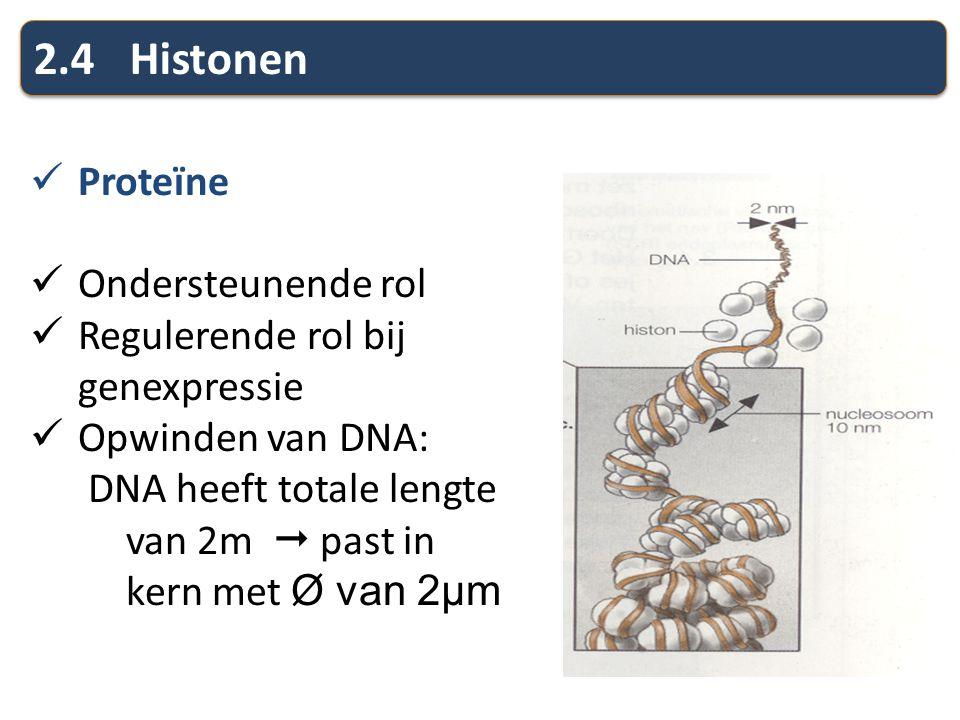 2.4 Histonen Proteïne Ondersteunende rol