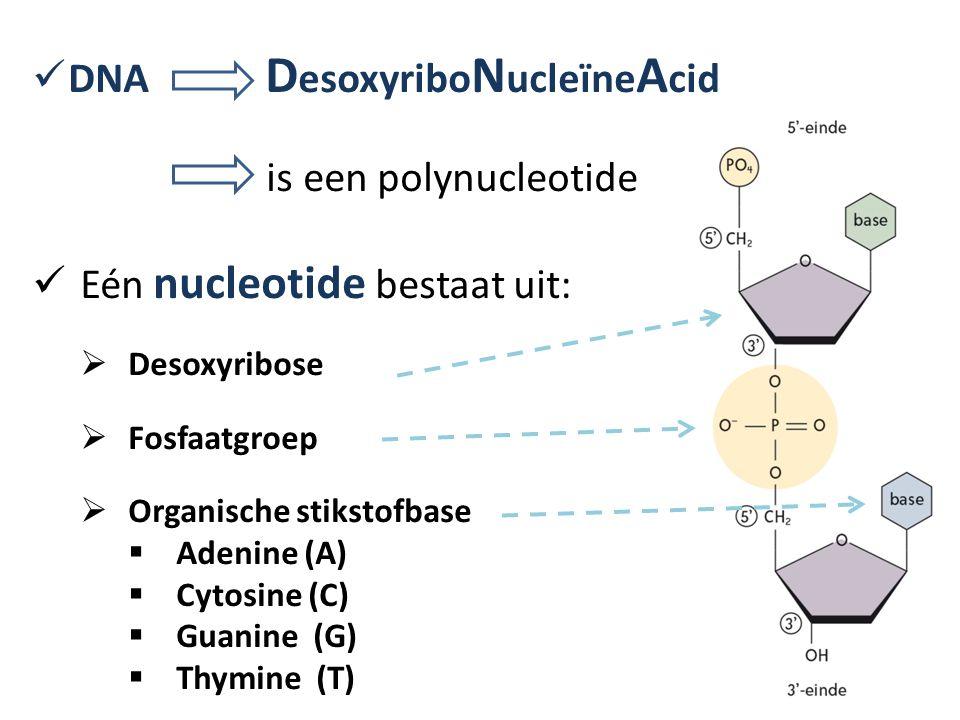 DNA DesoxyriboNucleïneAcid