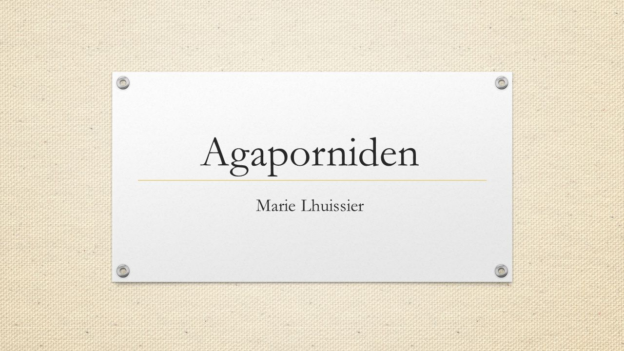 Agaporniden Marie Lhuissier