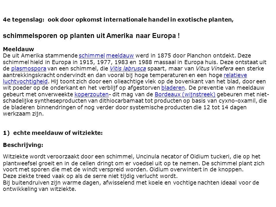 schimmelsporen op planten uit Amerika naar Europa !