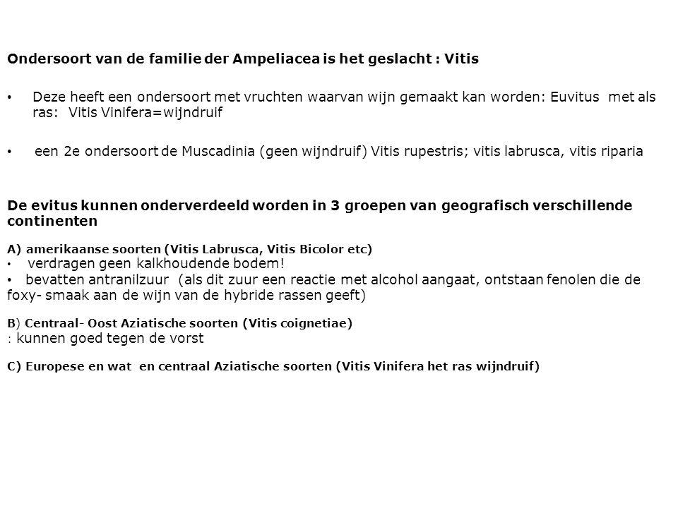 Ondersoort van de familie der Ampeliacea is het geslacht : Vitis