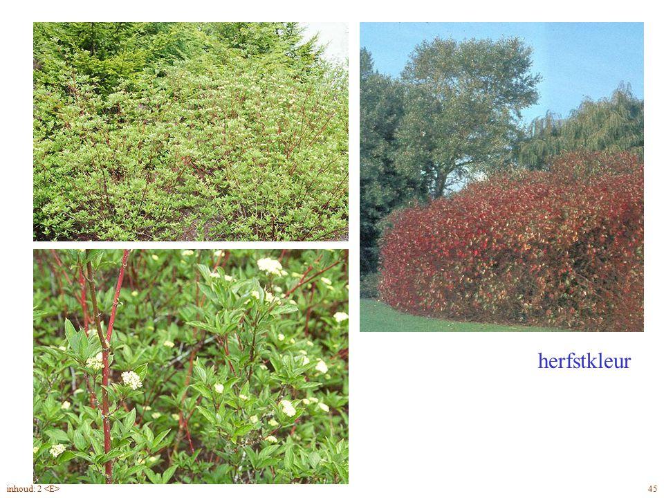 Cornus alba 'Sibirica' planten