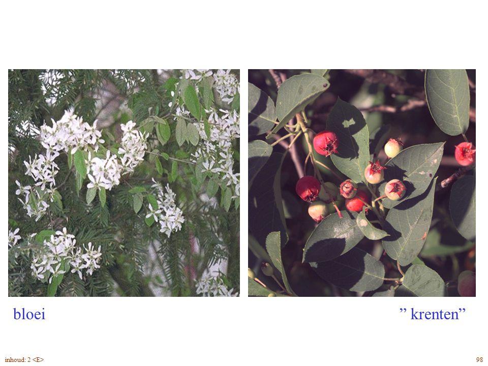 Amelanchier lamarckii bloei, vrucht