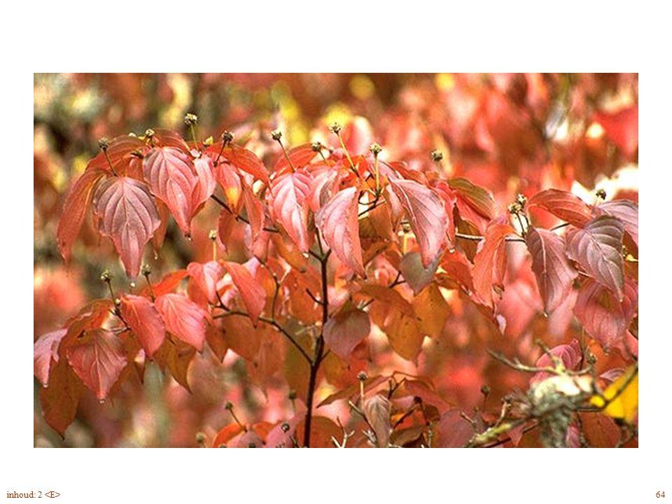 Cornus kousa blad herfst