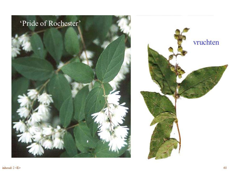 Deutzia scabra bloem, vrucht