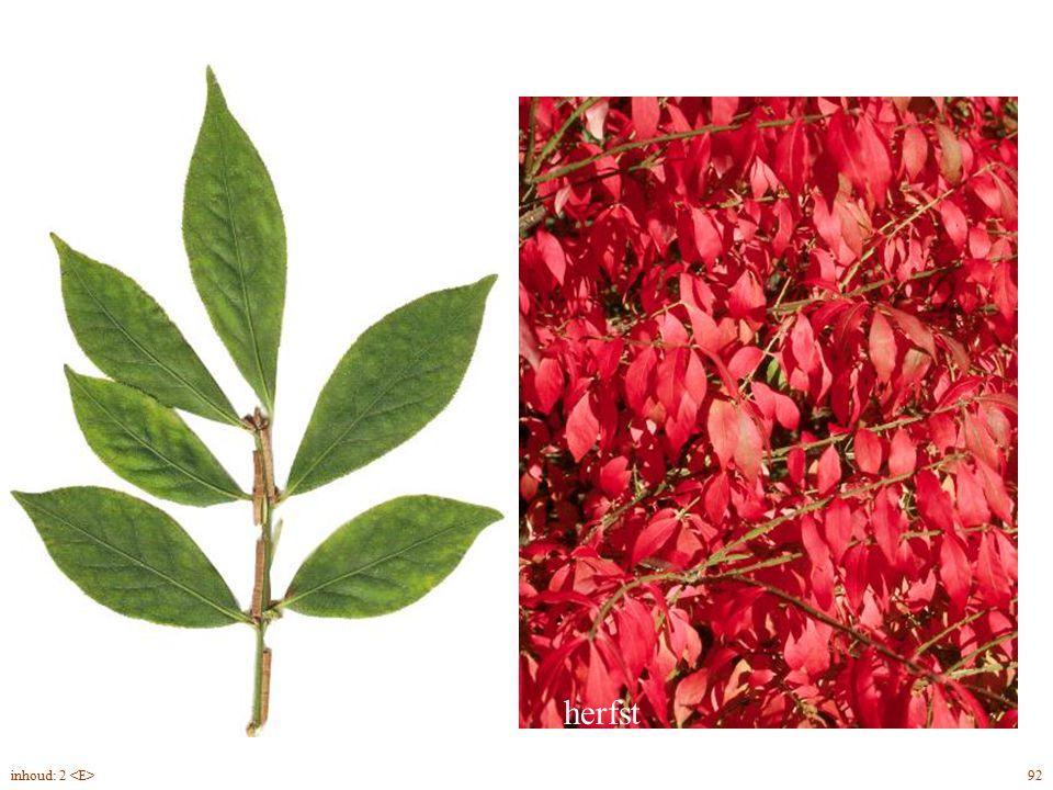 Euonymus alatus blad herfst inhoud: 2 <E> 92