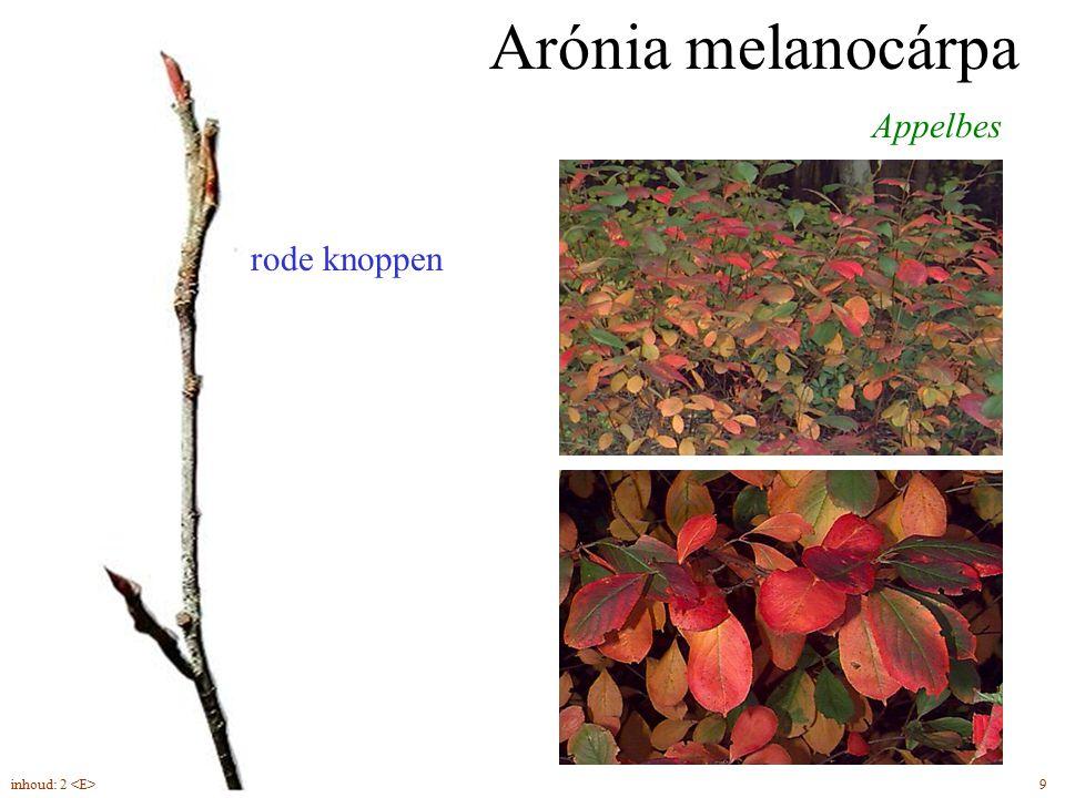 rode knoppen Arónia melanocárpa Appelbes bloei inhoud: 2 <E> 9