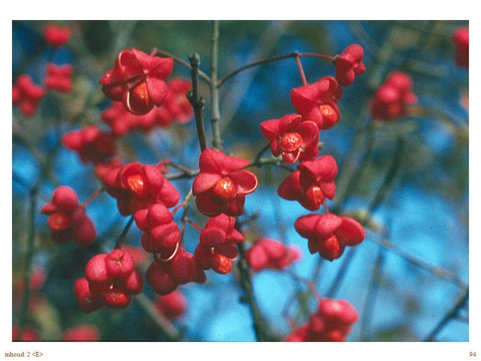 Euonymus europaeus blad, bloem vrucht