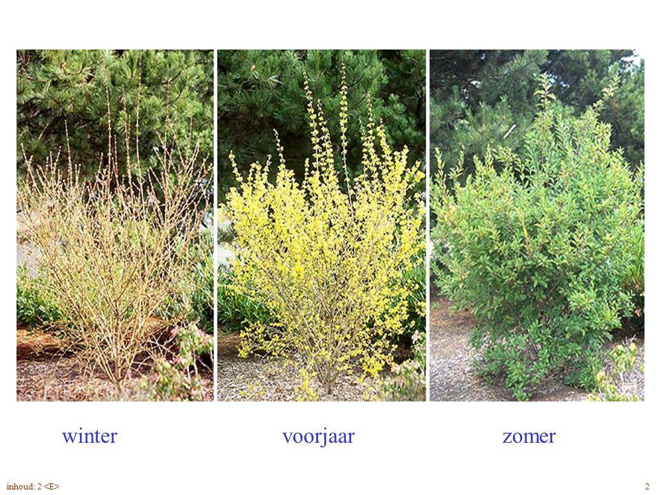 Forsythia x intermedia blad, seizoenen