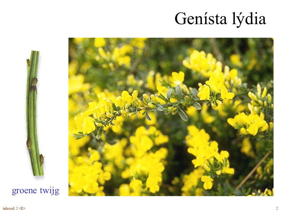 Genísta lýdia groene twijg inhoud: 2 <E> 2