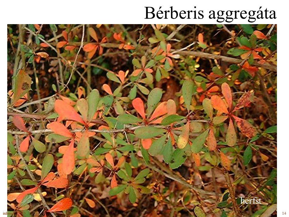 Bérberis aggregáta drie bladdoorns eetbare vruchten herfst