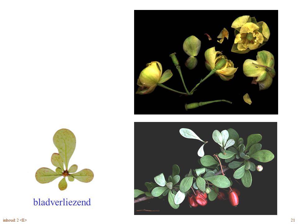 Bérberis thunbergii blad, bloei, vrucht