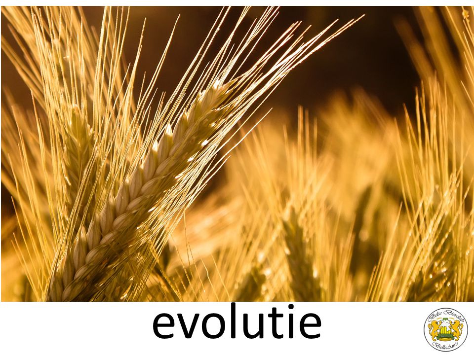 evolutie evolutie