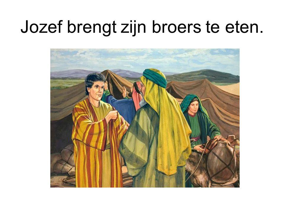 Jozef brengt zijn broers te eten.