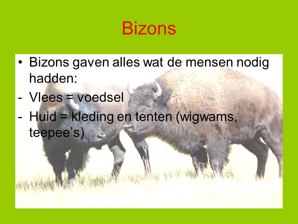Bizons Bizons gaven alles wat de mensen nodig hadden: Vlees = voedsel