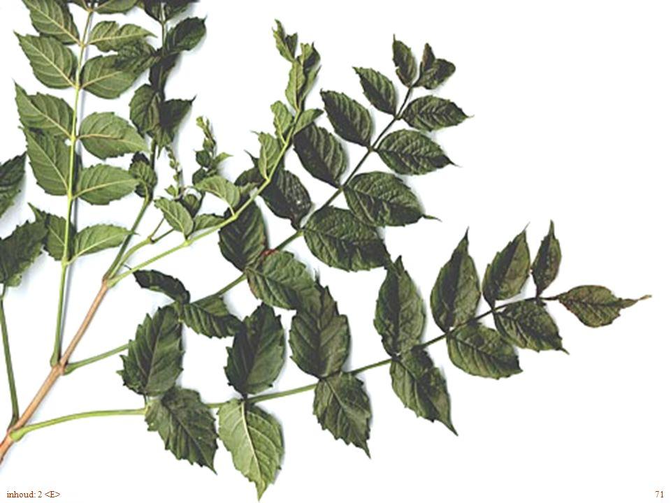 Cámpsis rádicans blad, bloem