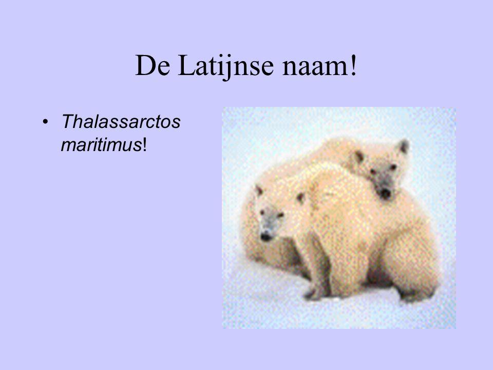De Latijnse naam! Thalassarctos maritimus!