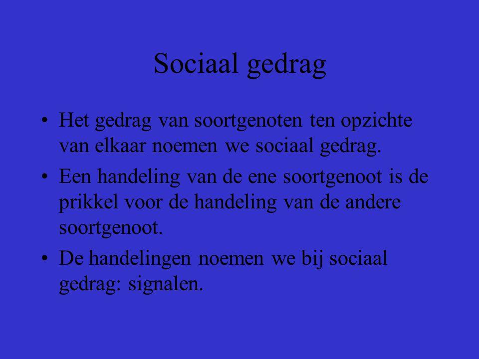 Sociaal gedrag Het gedrag van soortgenoten ten opzichte van elkaar noemen we sociaal gedrag.