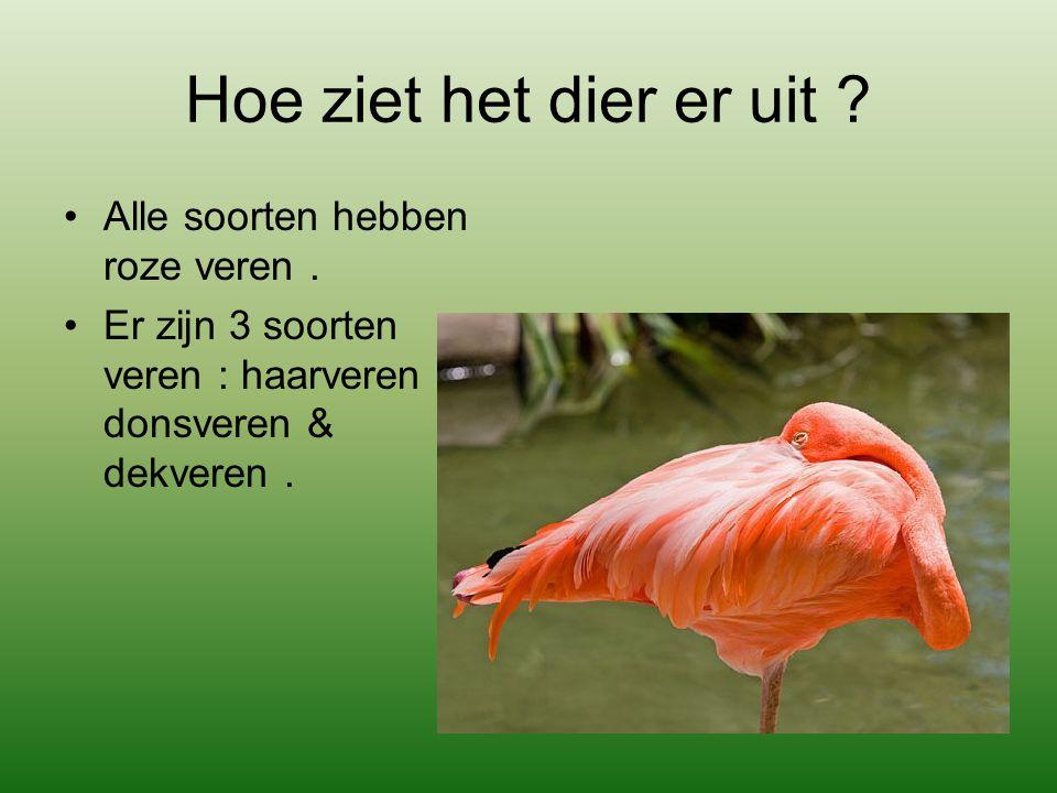 Hoe ziet het dier er uit Alle soorten hebben roze veren .