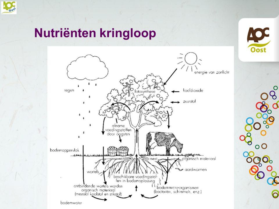 Nutriënten kringloop
