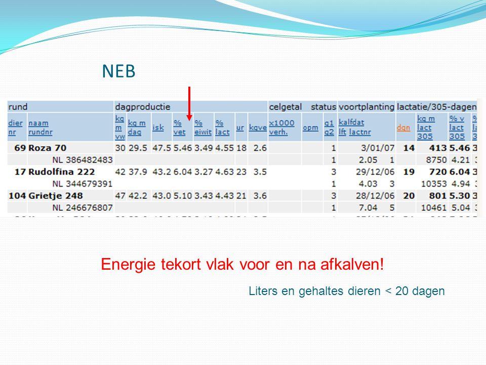 Energie tekort vlak voor en na afkalven!