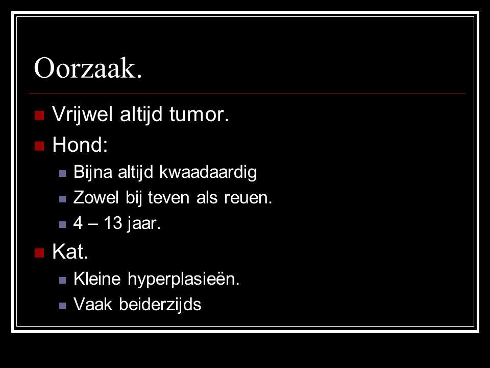 Oorzaak. Vrijwel altijd tumor. Hond: Kat. Bijna altijd kwaadaardig