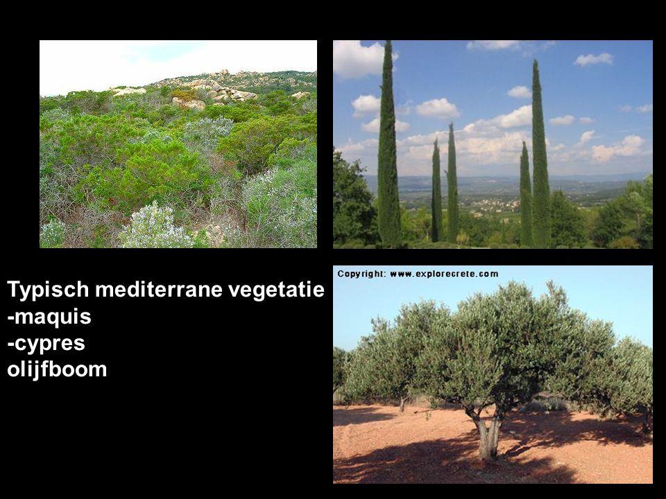 Typisch mediterrane vegetatie